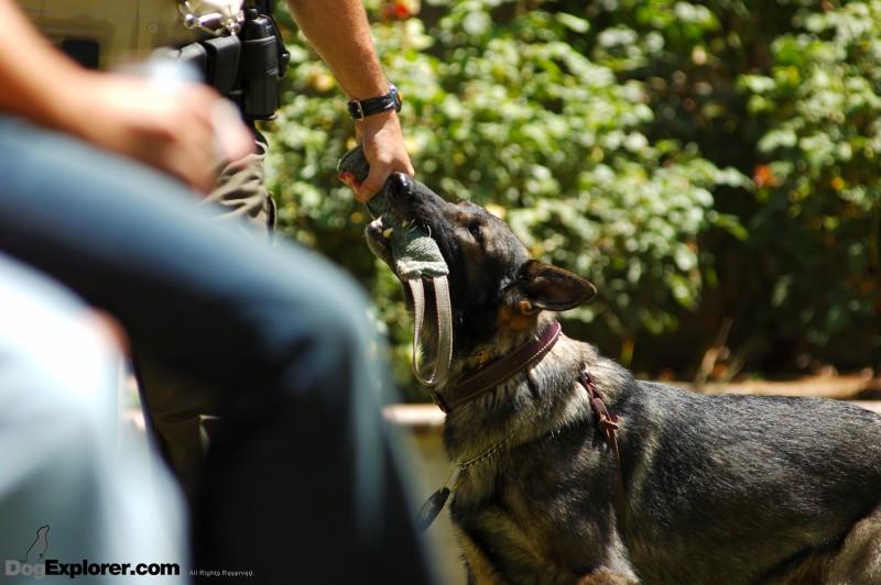 DAWG Working Dog Fundraiser German Shepherd Police K-9 Training Reward Toy Dog Pictures Xalvo