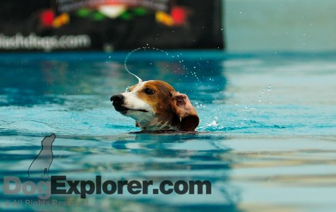 Splash Dogs Hotrod Dachshund
