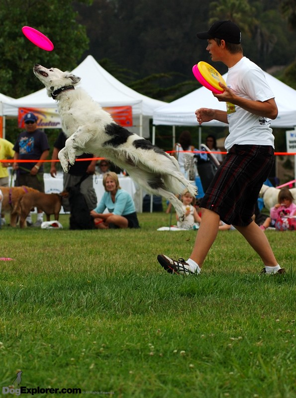 Dog Picture: Pooch Parade 2008 – Ventura