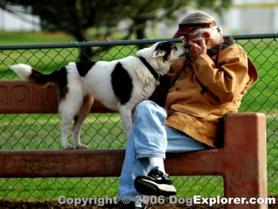 Redondo Beach Dog Park Dog Picture Gallery Opens