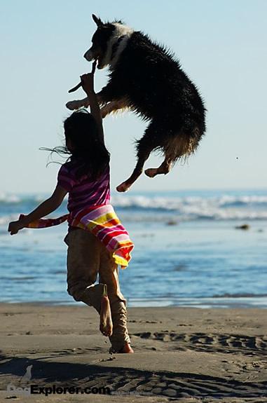 Dog Picture: Australian Shepherd
